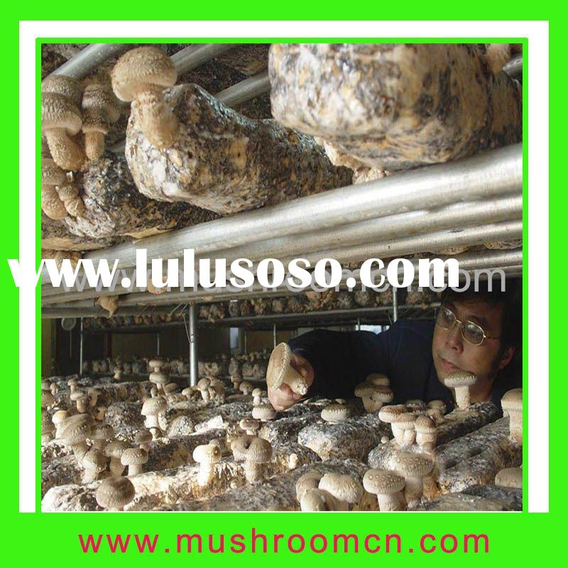 Mushroom cultivation bag