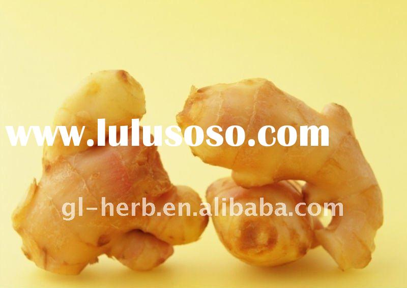 Herbal Medicine Gingerols 5% Ginger Root Extract Powder P.E.