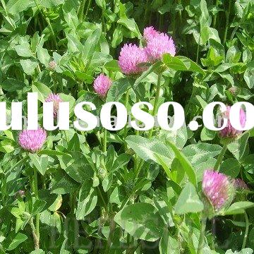 Red Clover Extract Powder(40%)