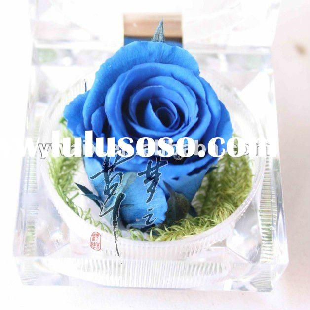2012 New Design Hot Sale Preserved Roses;Natural Flowers;Decorative Flowers;Flower Gifts and Valenti